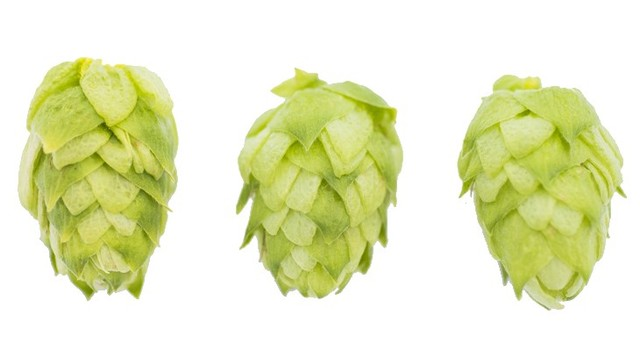 Tap This: Let the power of hops compel you