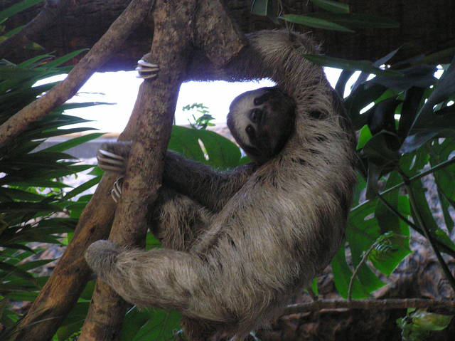 News of the Weird: Sleepovers with sloths and hunting from hot air balloons